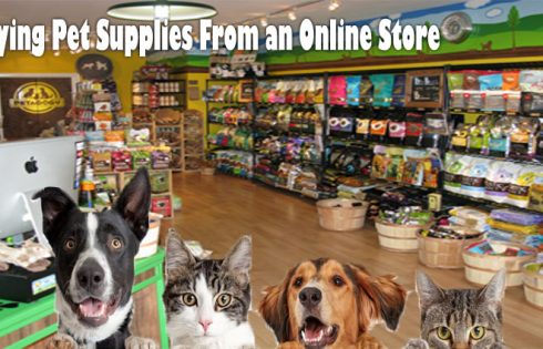 5 Smart Motives for Buying Pet Supplies From an Online Store